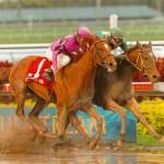 Horses can run !